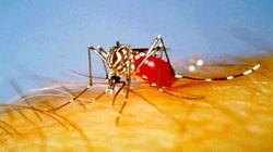 Aedesaegyptimosquito_2