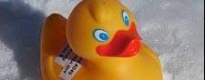 Les canards de la Nasa sont portés disparus