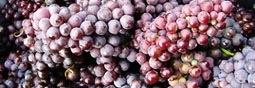 Statistiques de coin de table pour le raisin de table.