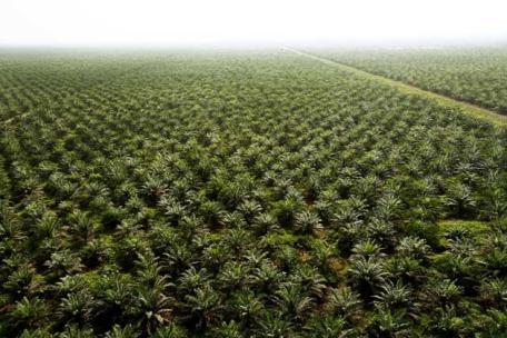 Agrocarburants : bienvenue dans l'enfer vert