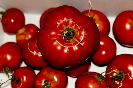 © Tomates de Pas-de-Calais © Denis Delbecq