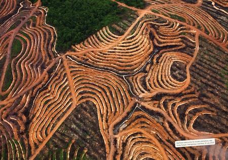 Plantation de palmiers à huile © Greenpeace