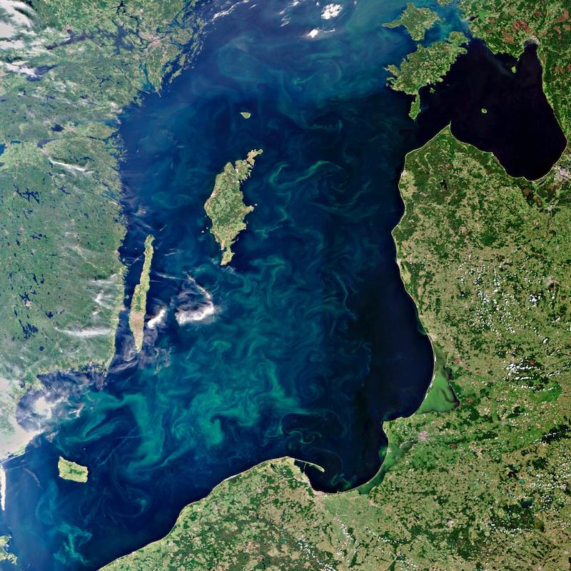 Boom de plancton dans la Baltique © ESA