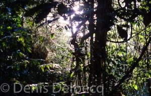 Saupoudrer de l'olivine sur la forêt Amazonienne, y'a qu'à!
