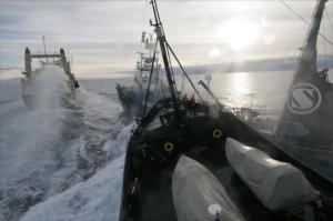 Le Steve Irwin de la Sea Shepherd se prépare à entrer en collision avec un baleinier japonais © Adam Lau/Sea Shepherd