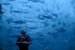 Dans une cage de thons rouges © Philippe Henry / Océan 71