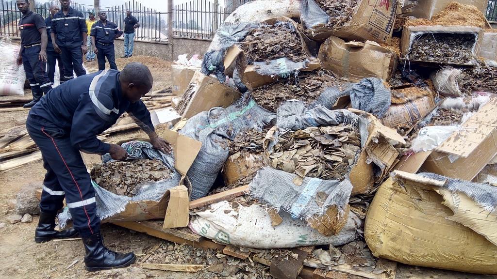 Saisie d'écailles de pangolin au Cameroun © Fidelis Pegue Manga/WWF