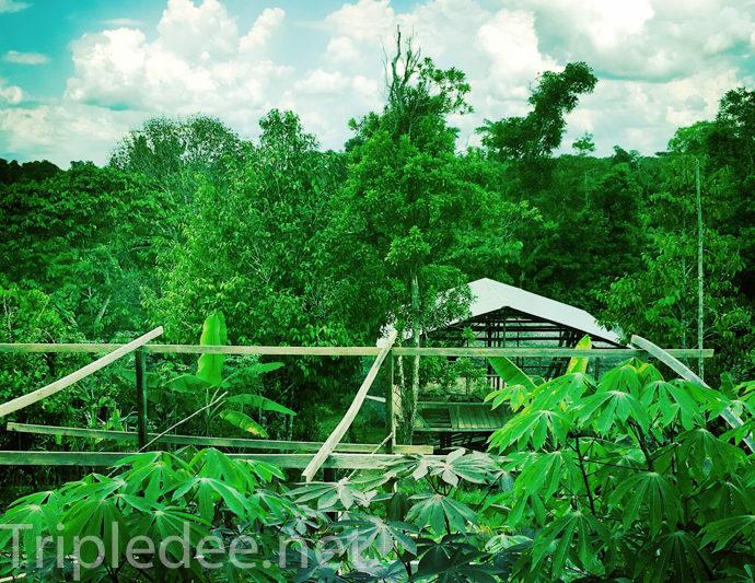 En Amazonie colombienne © Denis Delbecq